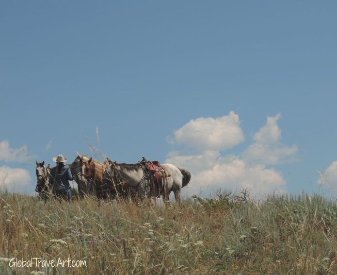 Cowgirl und Pferde