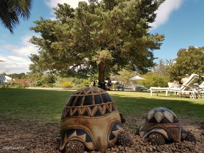 Schildkröten1.jpg